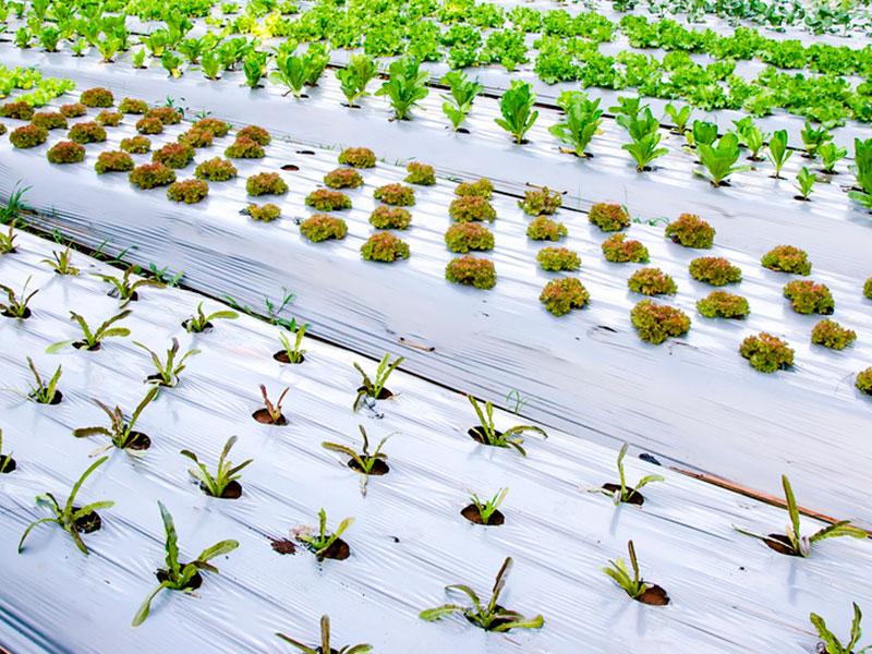 Plástico e agricultura – O futuro chegou!