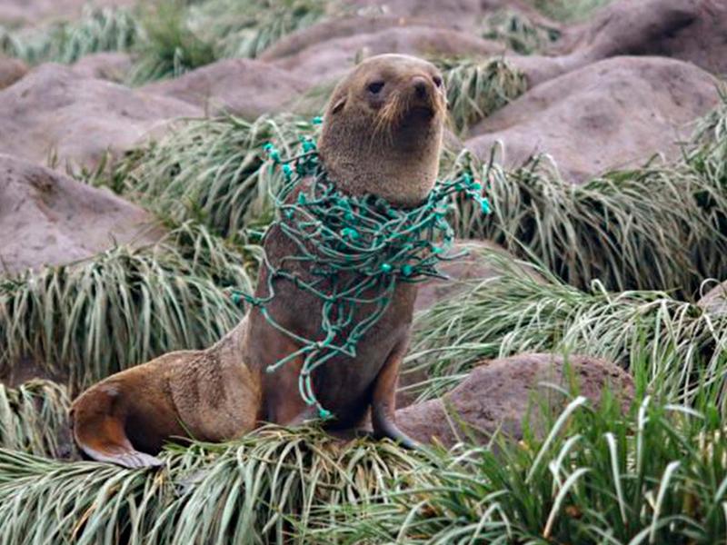 A poluição plástica chegou aonde ninguém pensava que chegaria