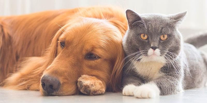 Acessórios para pets – Um mercado em crescimento!