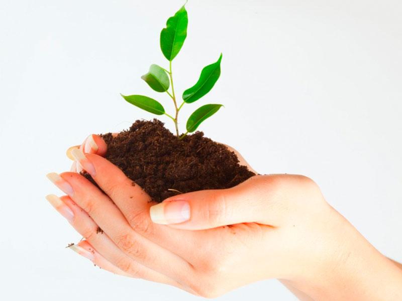 Algumas maneiras eficientes para preservar o meio ambiente.